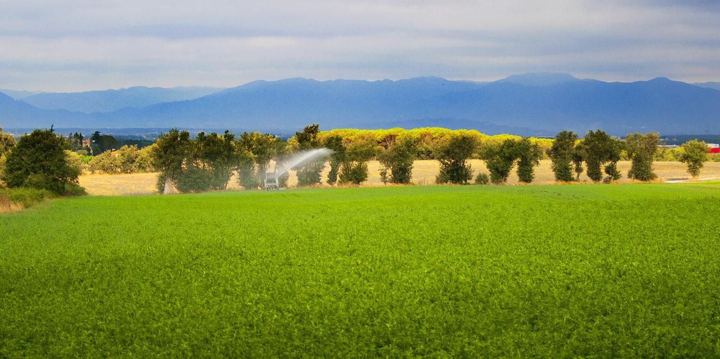 campos de pastar de las vacas de la selvatana
